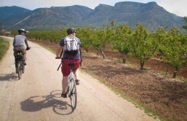 Cycling through orange trees