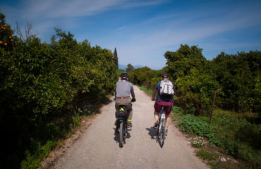 Cycling through the orange trees