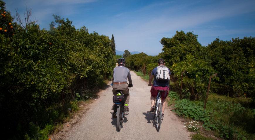 Cycling through the orange trees