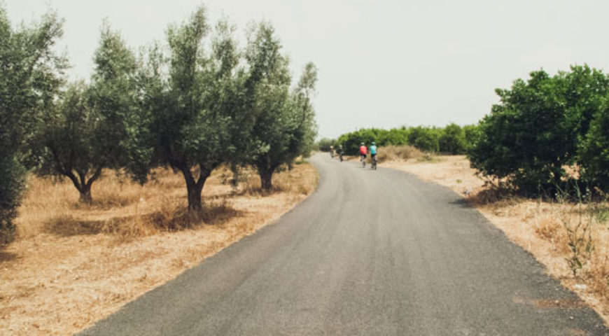 Cycling through olive trees