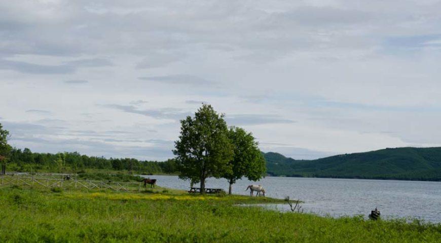 Horses around Plastira lake