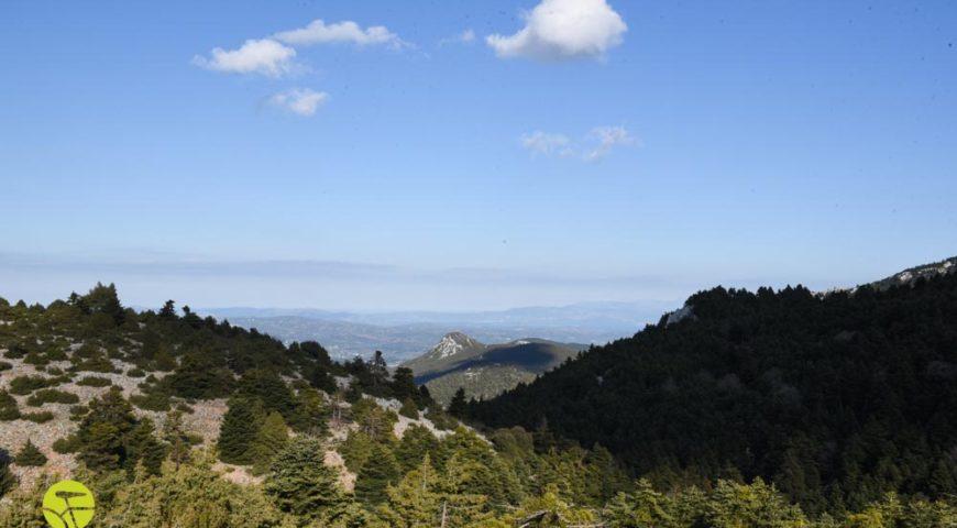 View od Schoinias