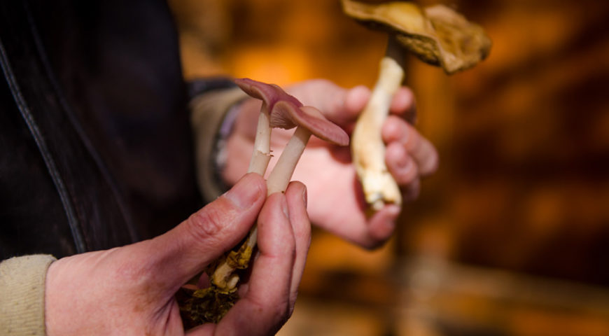 Collecting mushrooms at Nymfaio village